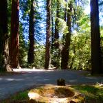 Blog Avenue of Giants 1