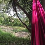 blog hammock view
